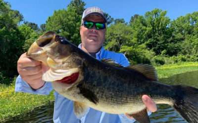 Double Largemouth Bass Fishing Charters for Trophy Fish in North Florida